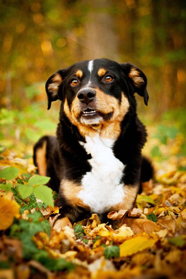 Fotoshooting Hund NRW
