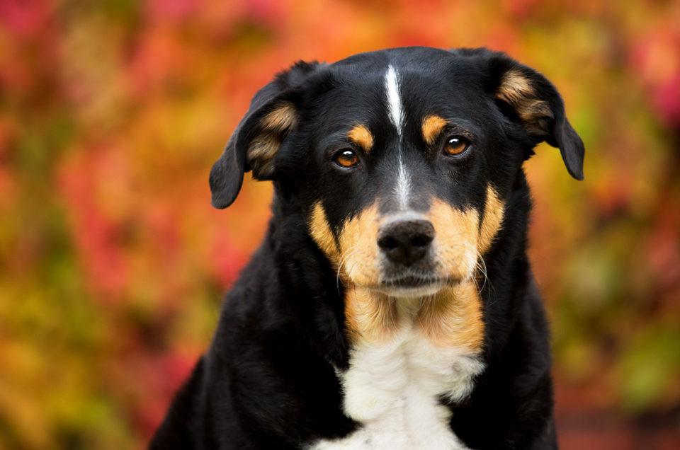 Mein Herzenshund
