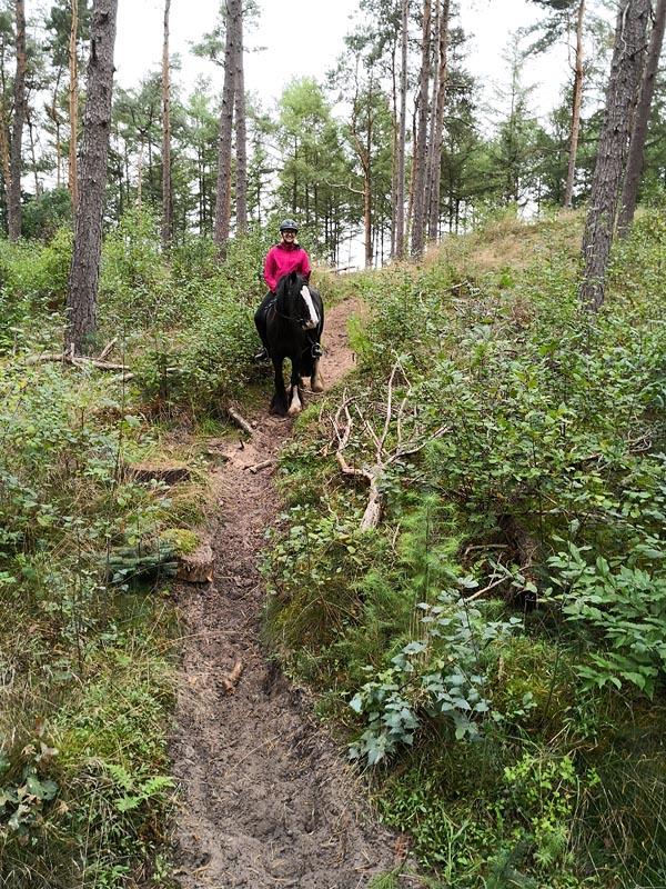Mit meinem Leihpony Jacinta im Wald