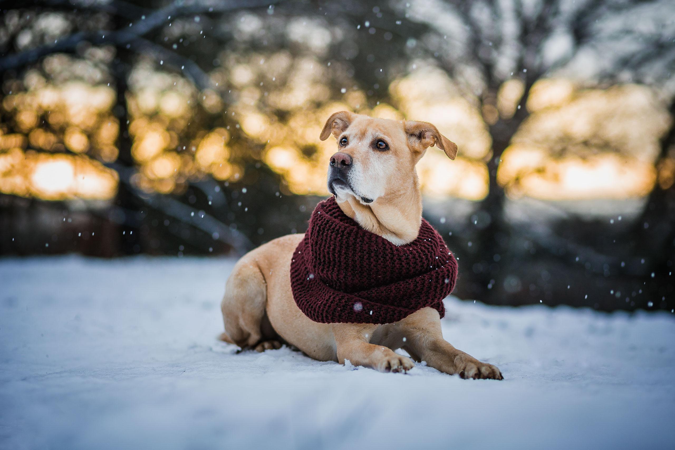 hundefotograf-weihnachtsgeschenk-hundebesitzer-01 » Anna Panke ...